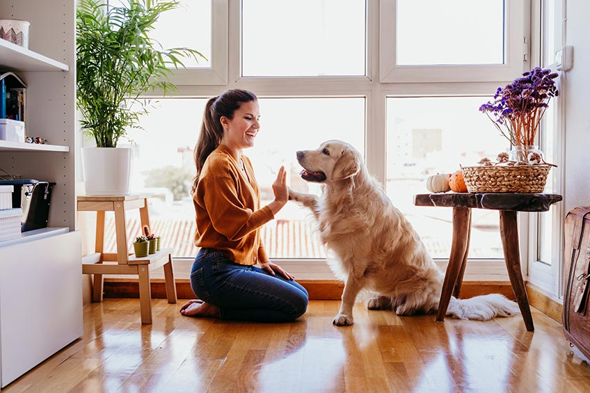 woman with golden retriever in front of windows